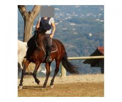 Demi-Pension cheval Polyvalent
