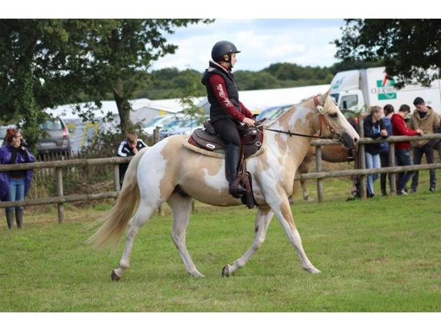 Saillie et IAC étalon paint horse dunalino tobiano