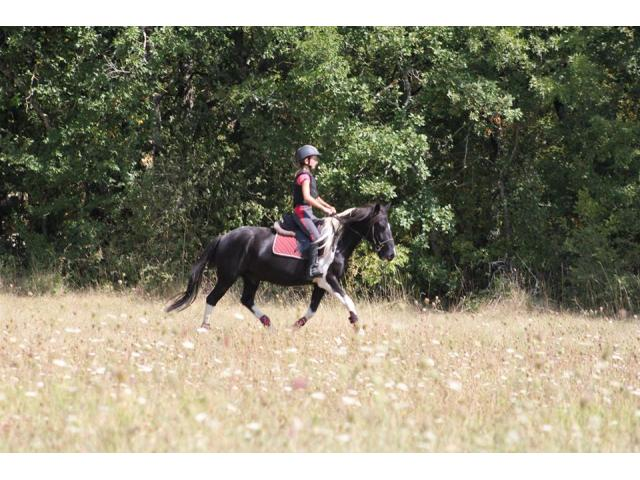 Propose demi pension sur double poney