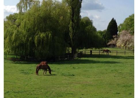 pension chevaux boxe et pré
