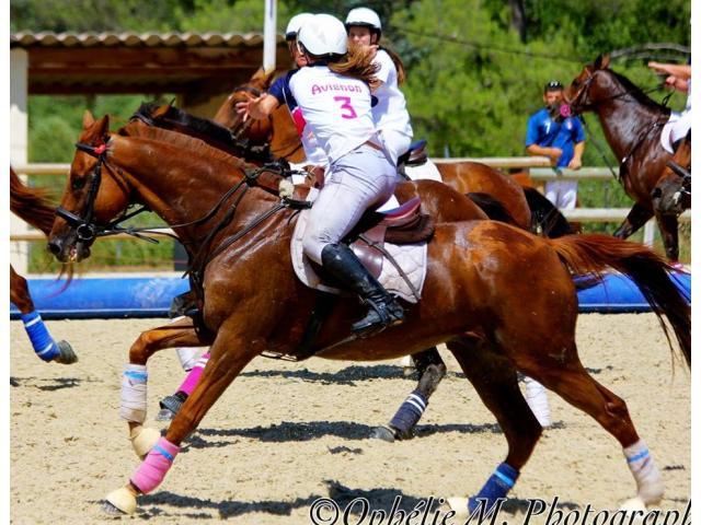 PIOMBU hongre horse-ball