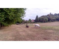 Cherche poney pour partager pré avec 2 chevaux