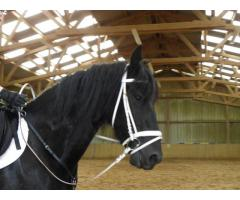 superbe cheval Hongre à donner