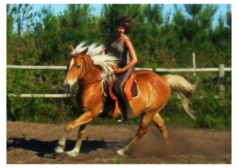Demi pension cheval Landes