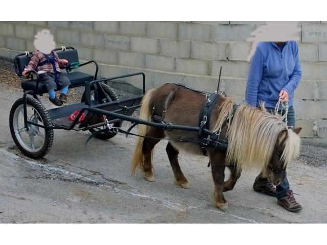 cheval miniature