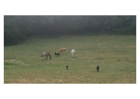 pension chevaux et poneys