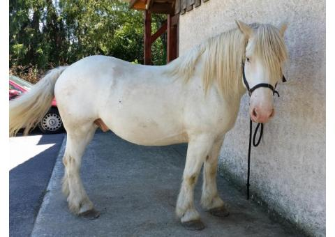 cheval rando / attelage
