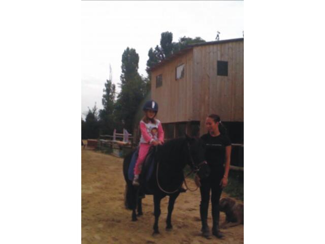 don 2 poneys pour retraite paisible