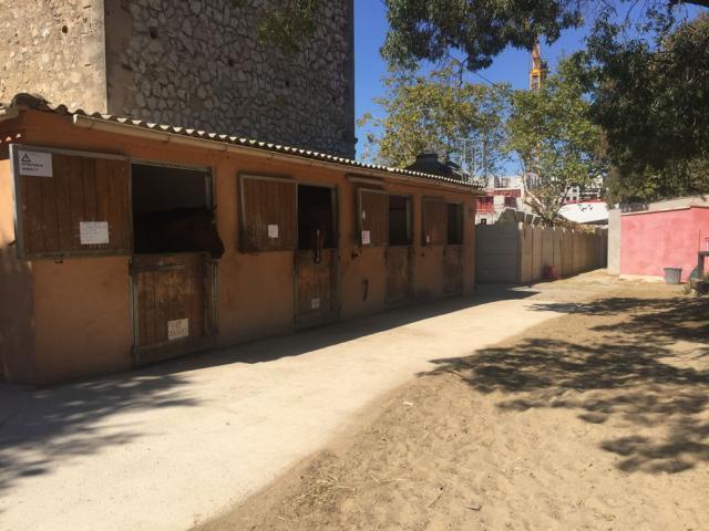 Propose pension poneys et chevaux