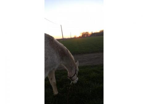 Recherche compagnie pour mon cheval