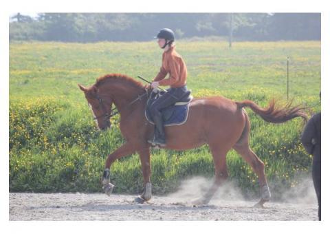 Recherche DP pour mon cheval
