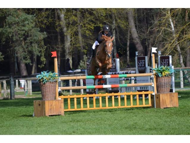 A vendre poney de competition ou loisir