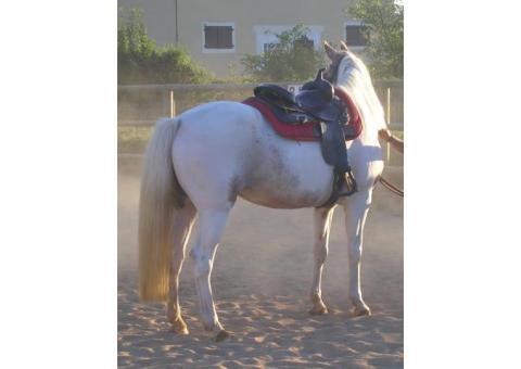 Recherche cavalier (loisir) -Nord-Ouest lyonnais