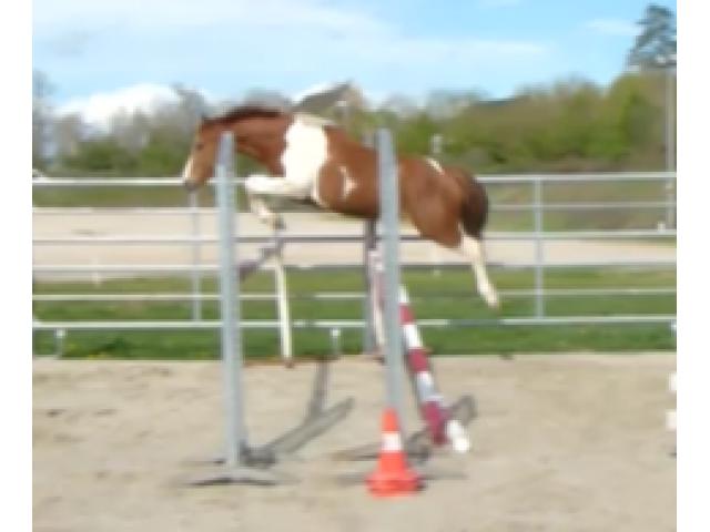 poney grand C