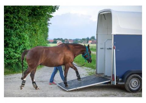 Don cheval hongre;Pure race espagnol