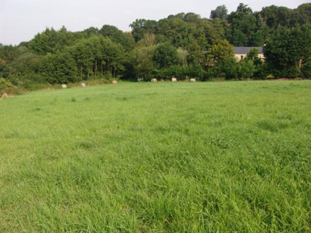 Maison + herbage sud Caen