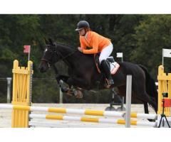 Cours équitation / Valorisation cheval