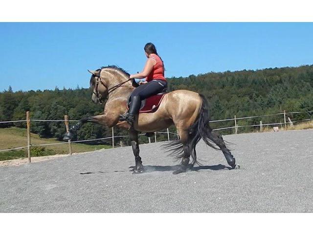 Incroyable cheval ibérique 8 ans