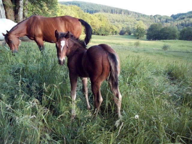 SUGAR PEPS TREPHY, poulain mâle Quarter horse 2019
