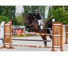 Typhon de Hus : cheval de qualité