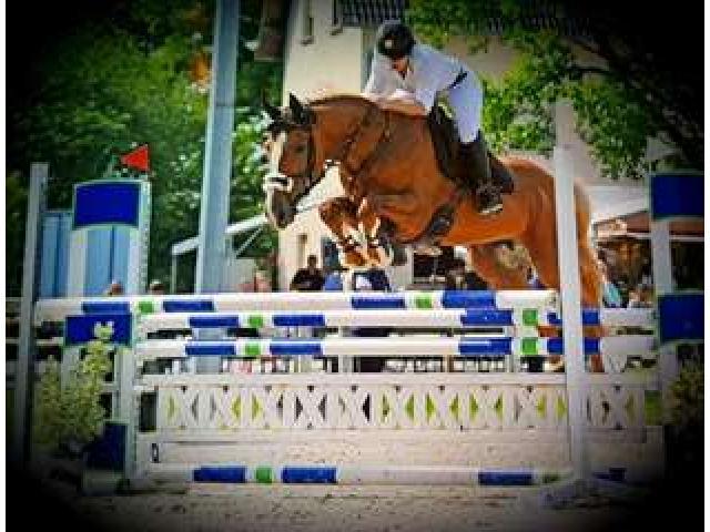 A donner Cheval de sport allemand 11 ans
