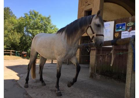 Petites Annonces Equestre Chevaux A Vendre