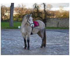 dp petit cheval joueur  lundi et/ou mercredi à Montfort