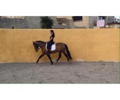 Sultao, joli petit espagnol