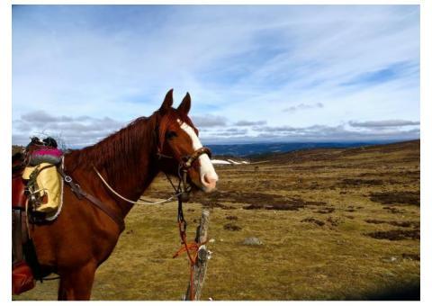 fantastique cheval d'exterieur