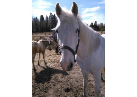 magnifique poney