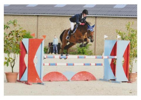 brave jument jumping beau potentiel