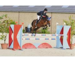 brave jument jumping beau potentiel
