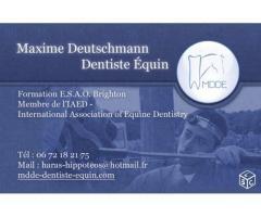 Dentiste équin à votre service!