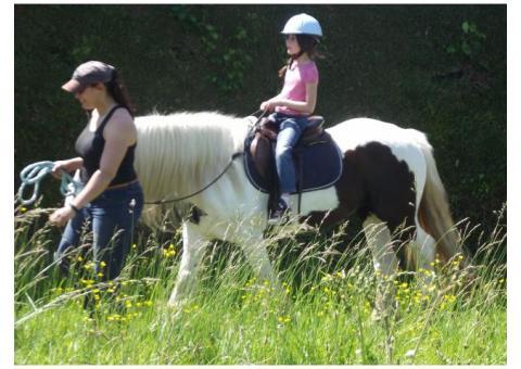 DP sur chevaux et poneys