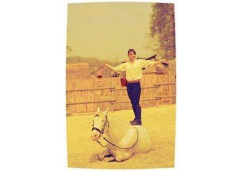 equi'libertad spectacles equestres