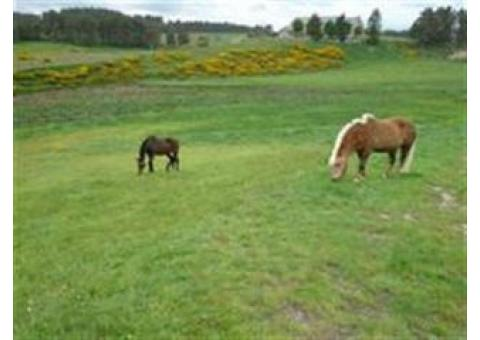 La Retraite de votre cheval en Lozère