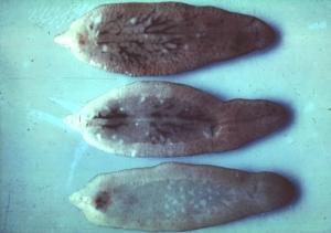Les parasites menus sur le corps
